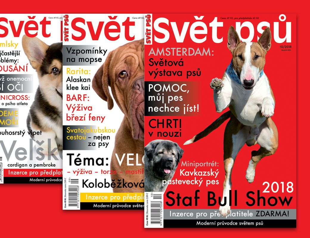 Svět psů